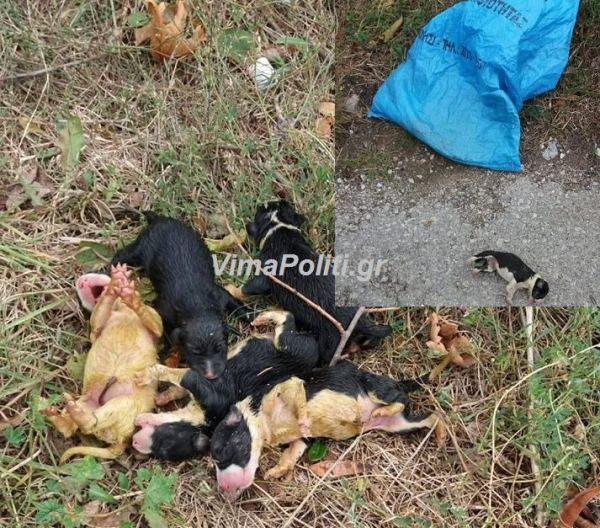 Καρπενήσι:Υπάνθρωποι πέταξαν σε χωράφι εφτά νεογεογέννητα κουτάβια