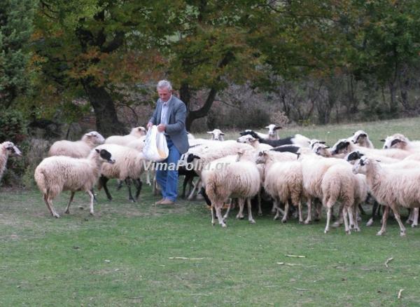 Σε οικονομικό αδιέξοδο οι κτηνοτρόφοι των Αγράφων-Κραυγή αγωνίας των δημάρχων
